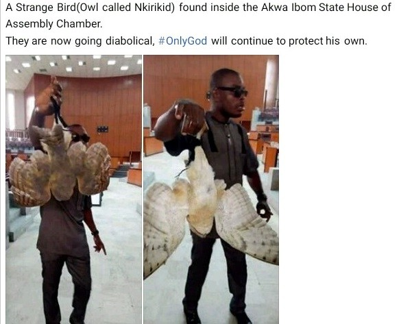 "Photos: ""Strange bird"" allegedly found inside Akwa Ibom State House of Assembly chamber"