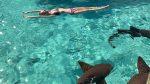 3 sharks attack, kill woman while swimming