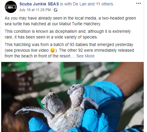 Two-headed turtle discovered in Malaysia
