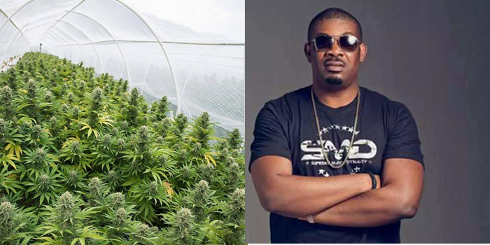 Image result for ENTERTAINMENT NEWS Don Jazzy Reveals Why Weed Should Be Legalized In Nigeria