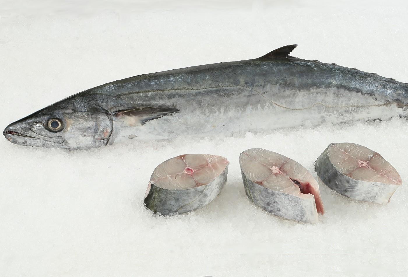Fresh king mackerel fish