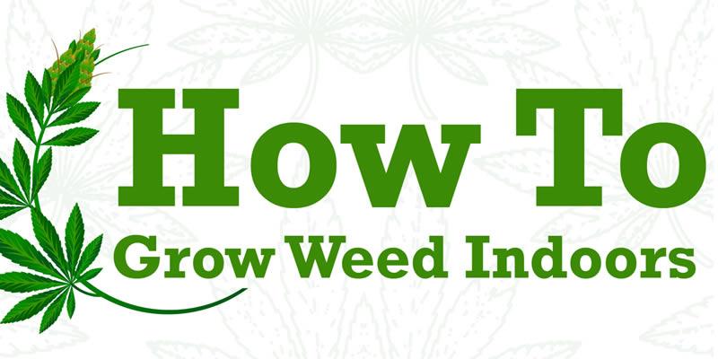 Ultimate guide to growing Marijuana indoors