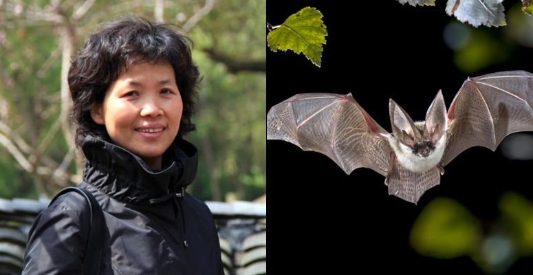 Scientist,Shi Zhengli calls for high alert for another coronavirus pandemic caused by bats