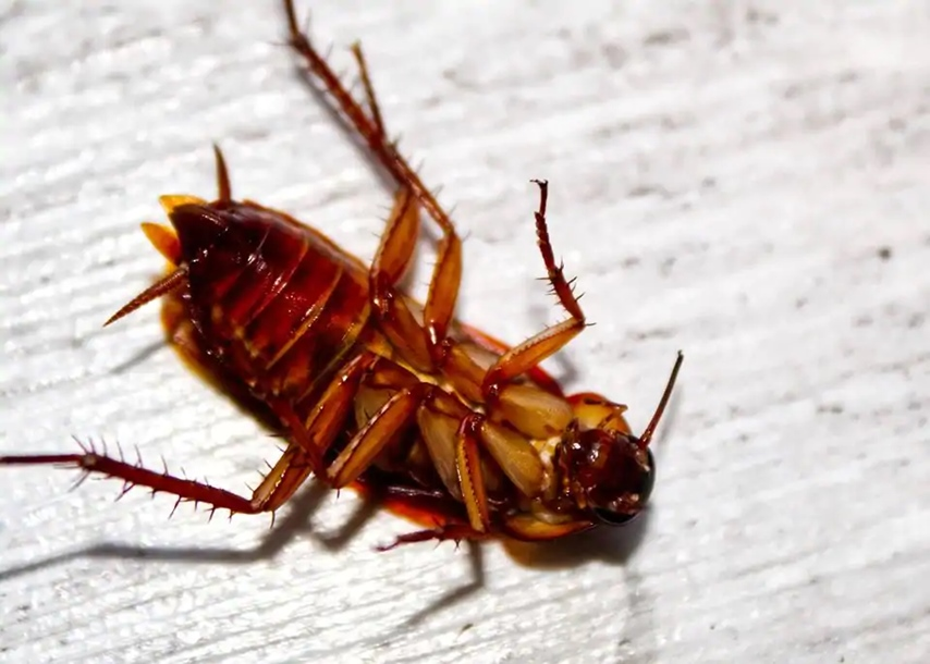 Doctor Pulls Out Live Cockroach Out of Chinese Woman's Ear