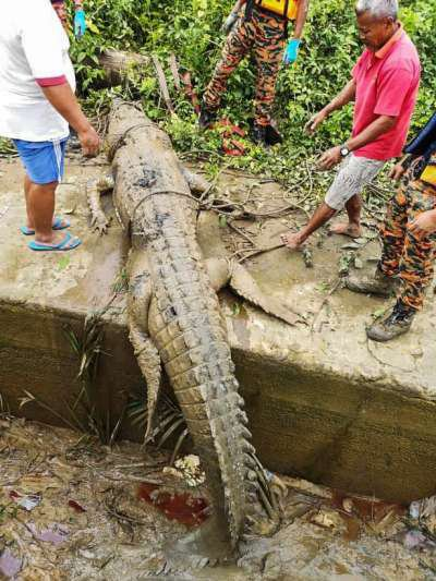 Remains Of Missing 14-Year-Old Boy Found In Crocodile's Stomach (See Photos)