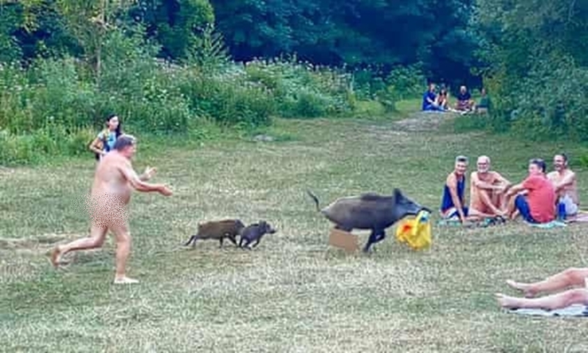 Photos: Naked German man chases wild boar that stole his laptop
