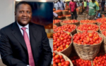 Dangote demands complete ban on importation of tomato