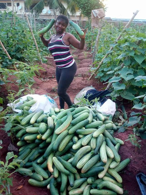 Nigerian lady, Mgbeke celebrates after a bountiful harvest; shows off large quantities of Cucumbers in her farm