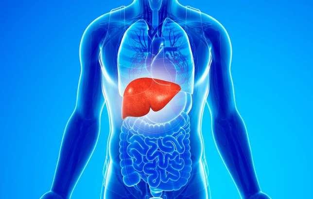 slide-3-liver-1518010637